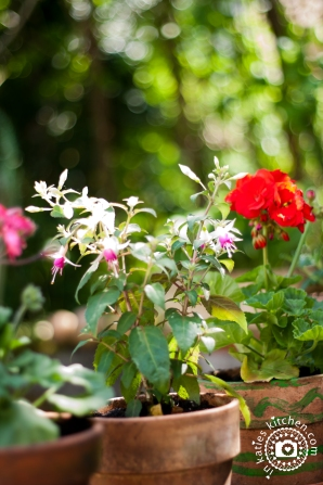 Garten_4